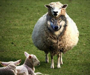 A Wold in Sheep's Clothing