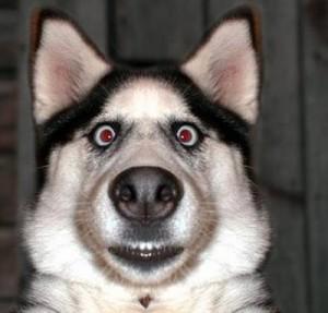 Dog Language: WHAT?